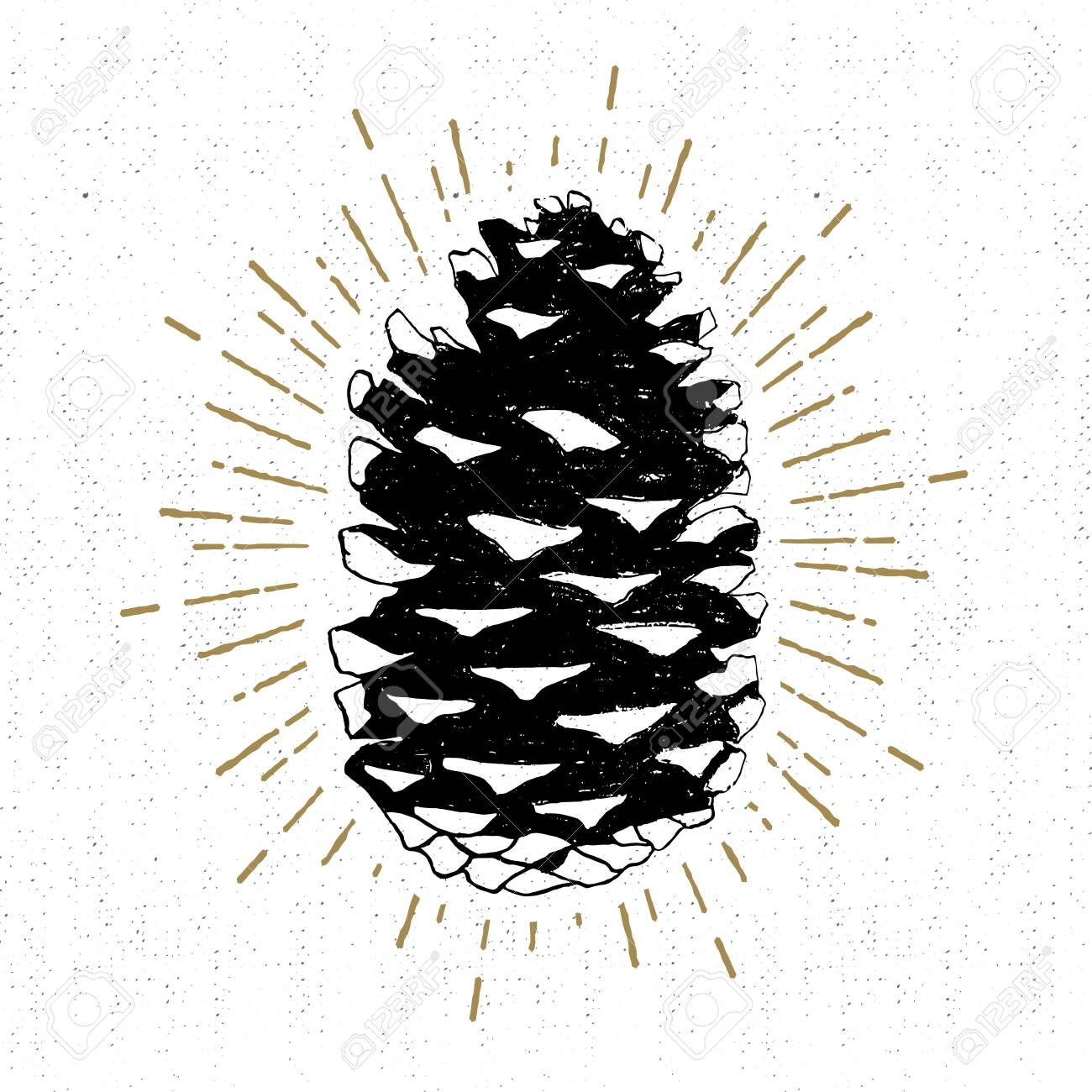 Hand drawn icon with a textured fir cone vector illustration. - 57683604
