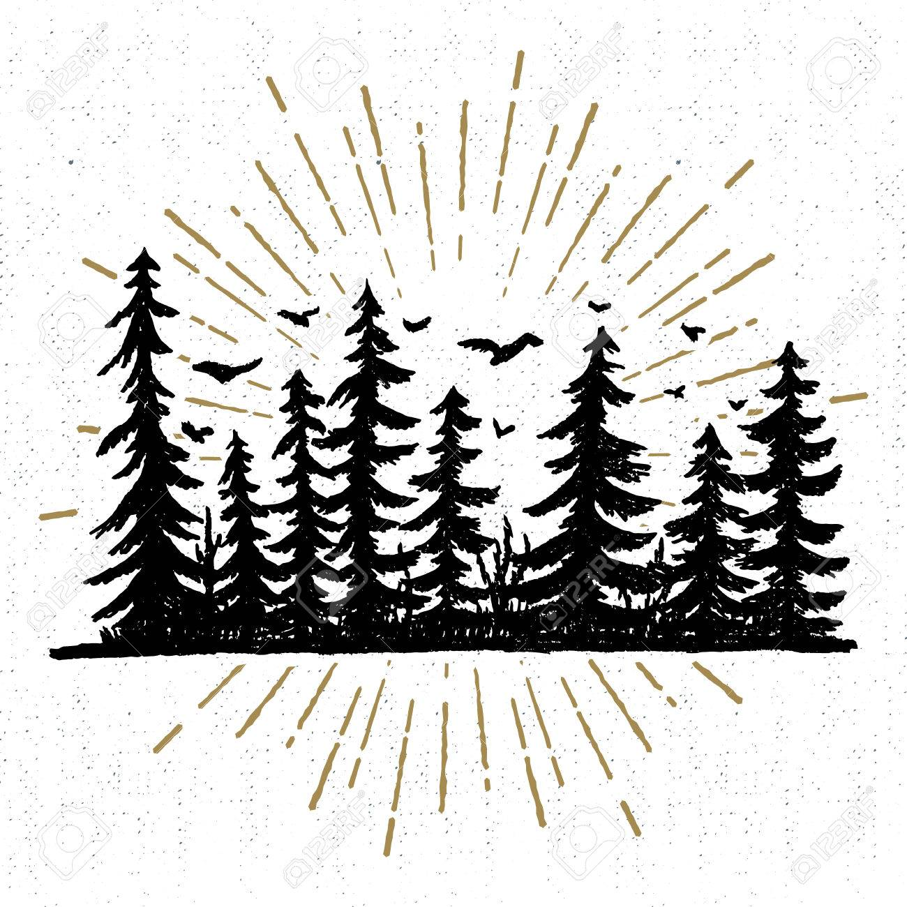 Hand drawn icon with a textured spruce trees vector illustration. - 60255329