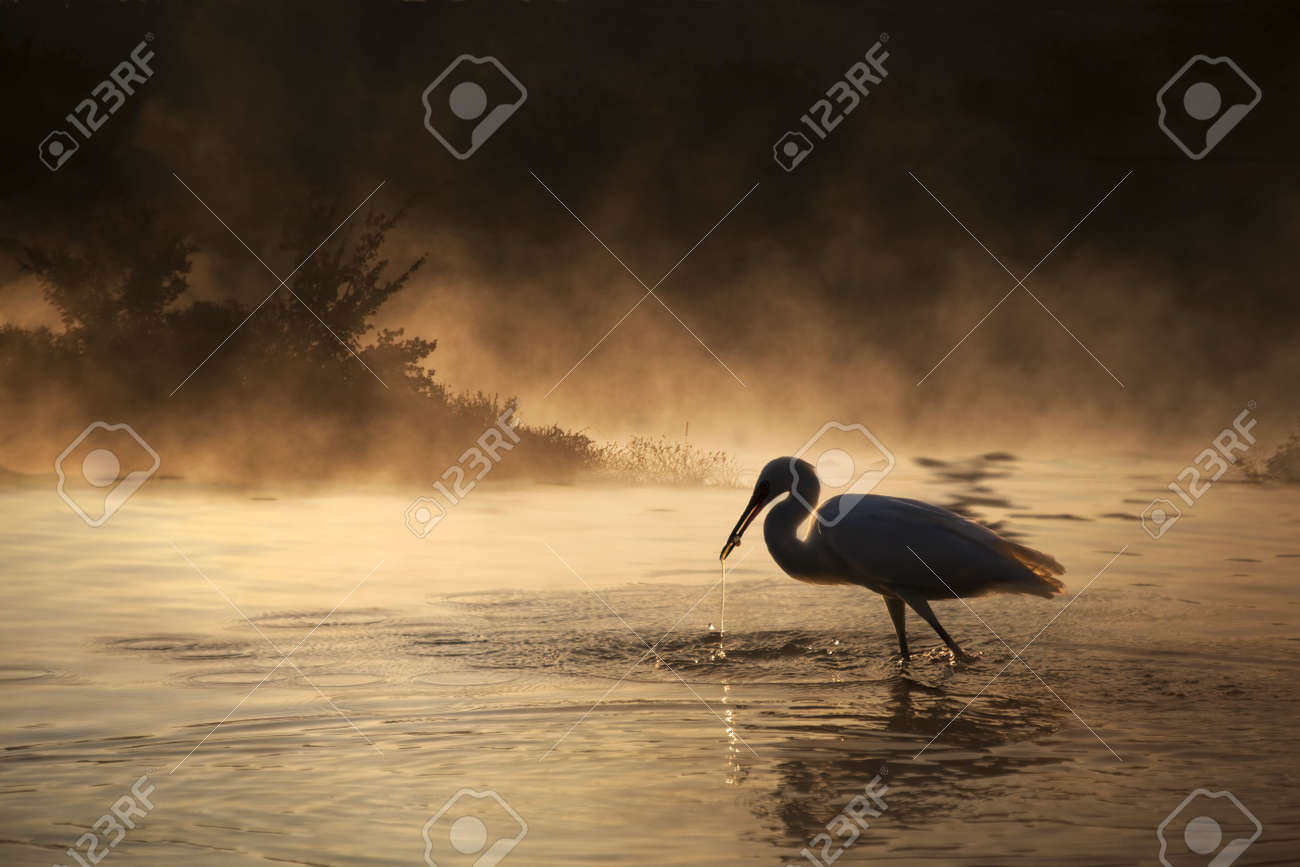 Silhouette of a Swan with a small fish in its mouth and a dramatic background. Stock Photo - 7905430