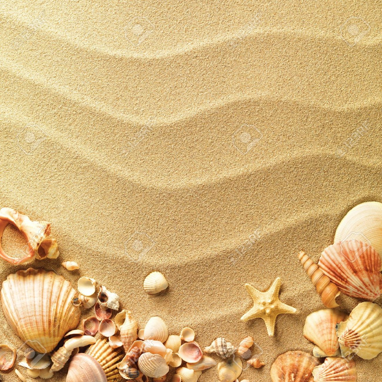 sea shells with sand as background Sea