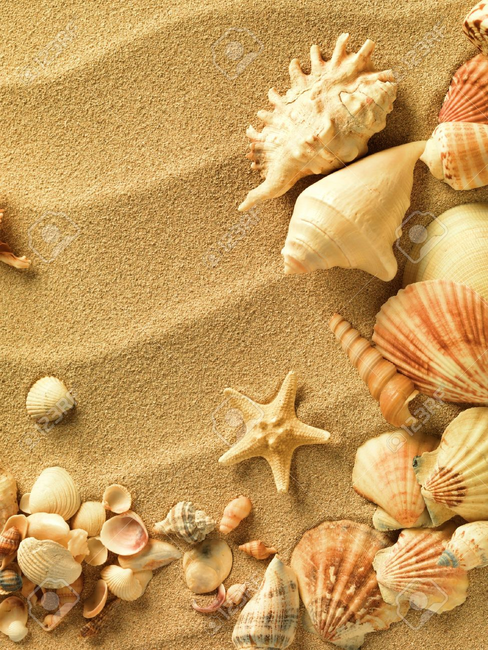 sea shells with sand as background Stock