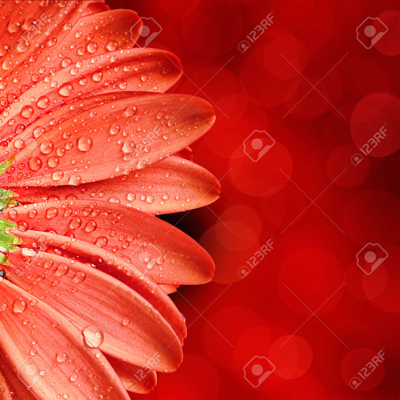 spring flower background Stock Photo - 11249088
