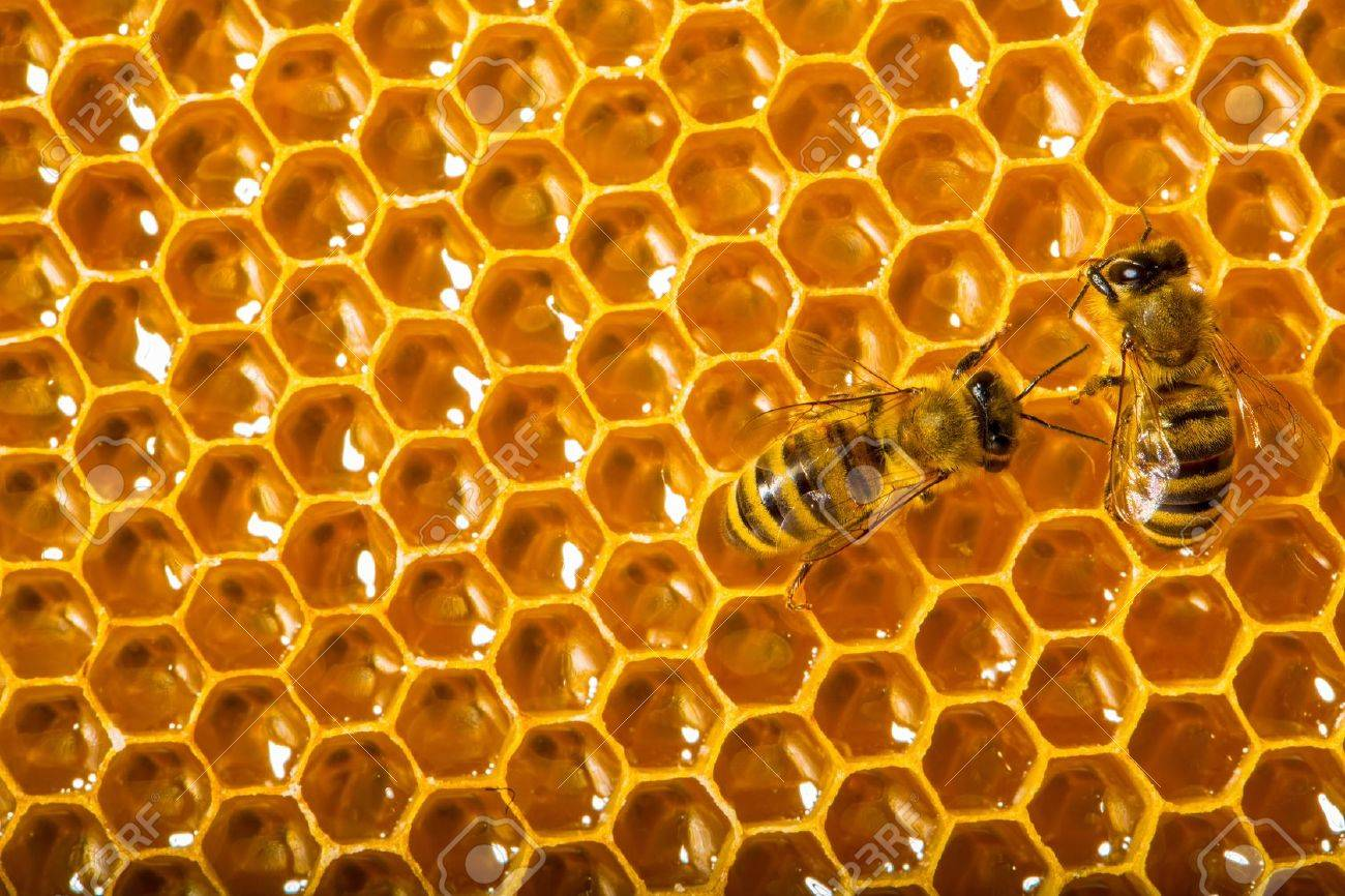 Close up view of the working bees on honeycells. Stock Photo - 14092198