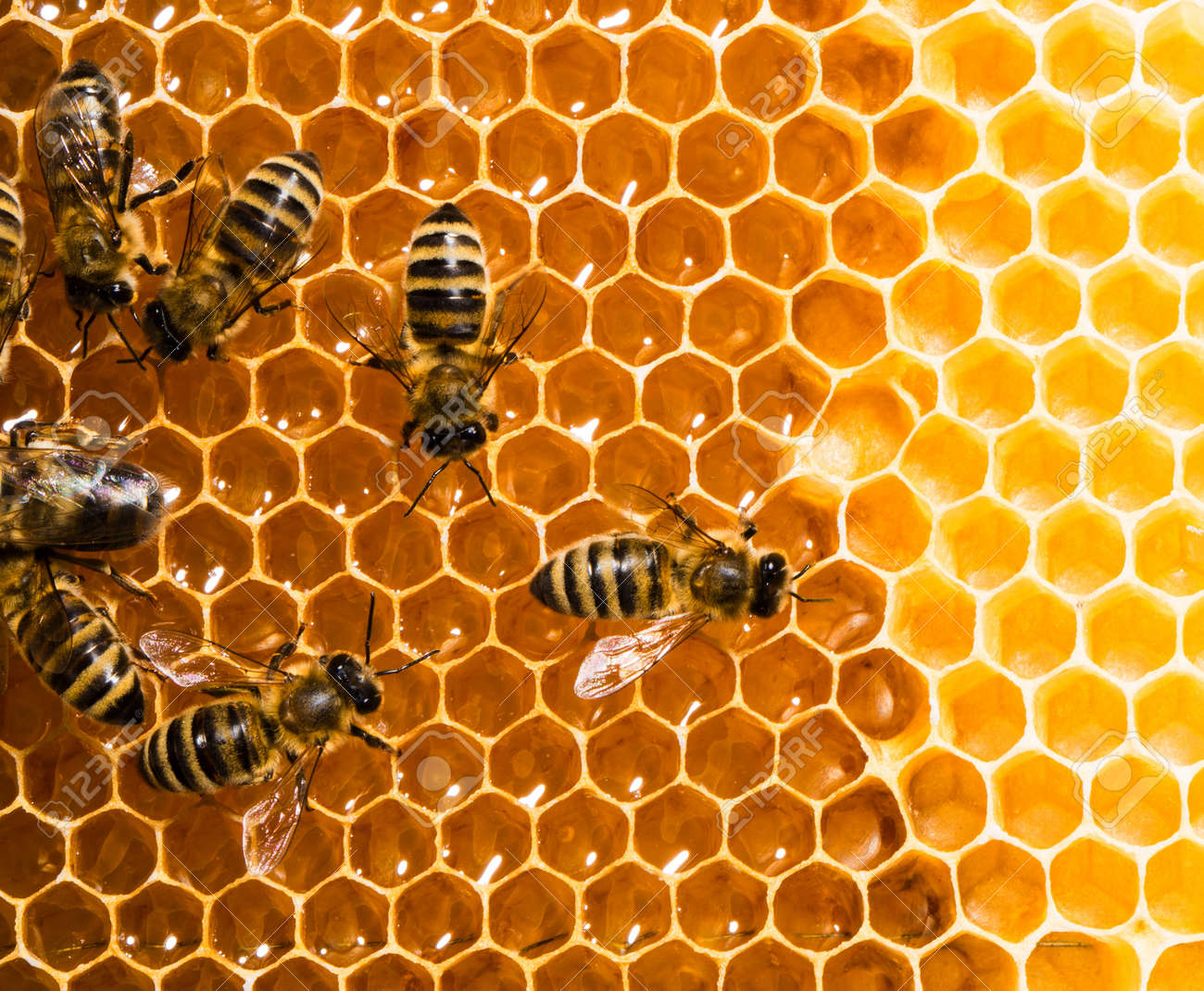 bees work on honeycombs Stock Photo - 14163774