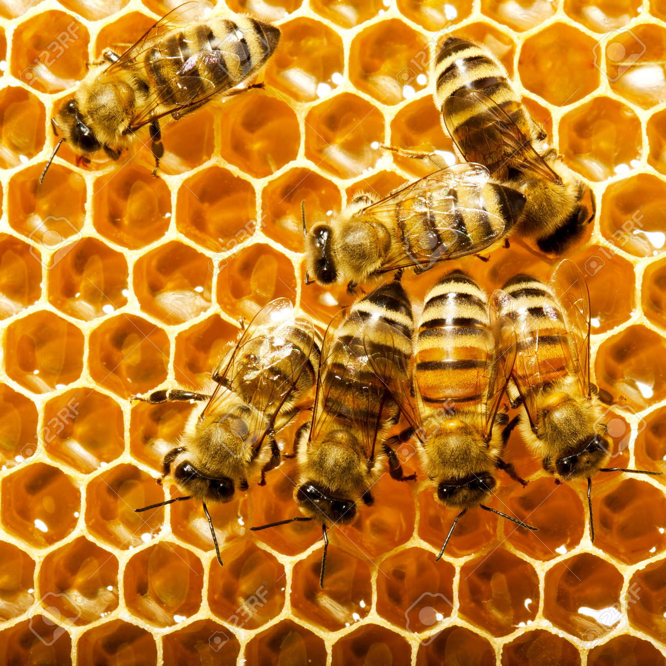 bees work on honeycombs Stock Photo - 14163857