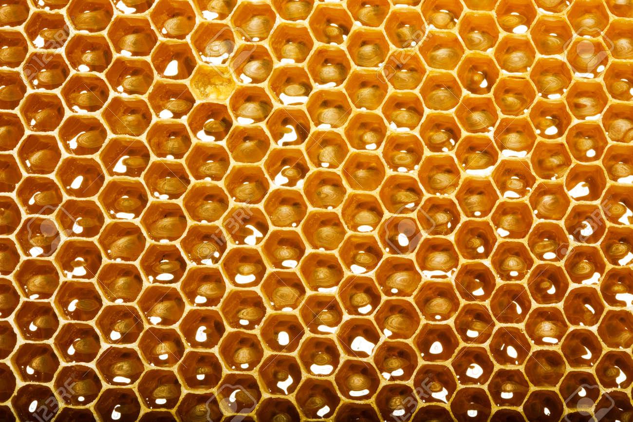 fresh honey in comb Stock Photo - 14163858