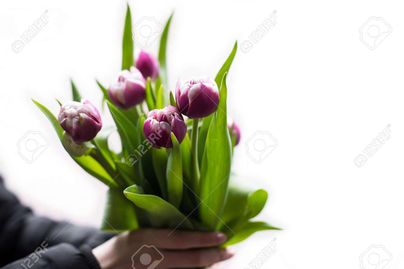 Hombre Que Sostiene Tulipanes Rosados. Plantilla De Tarjeta De ...
