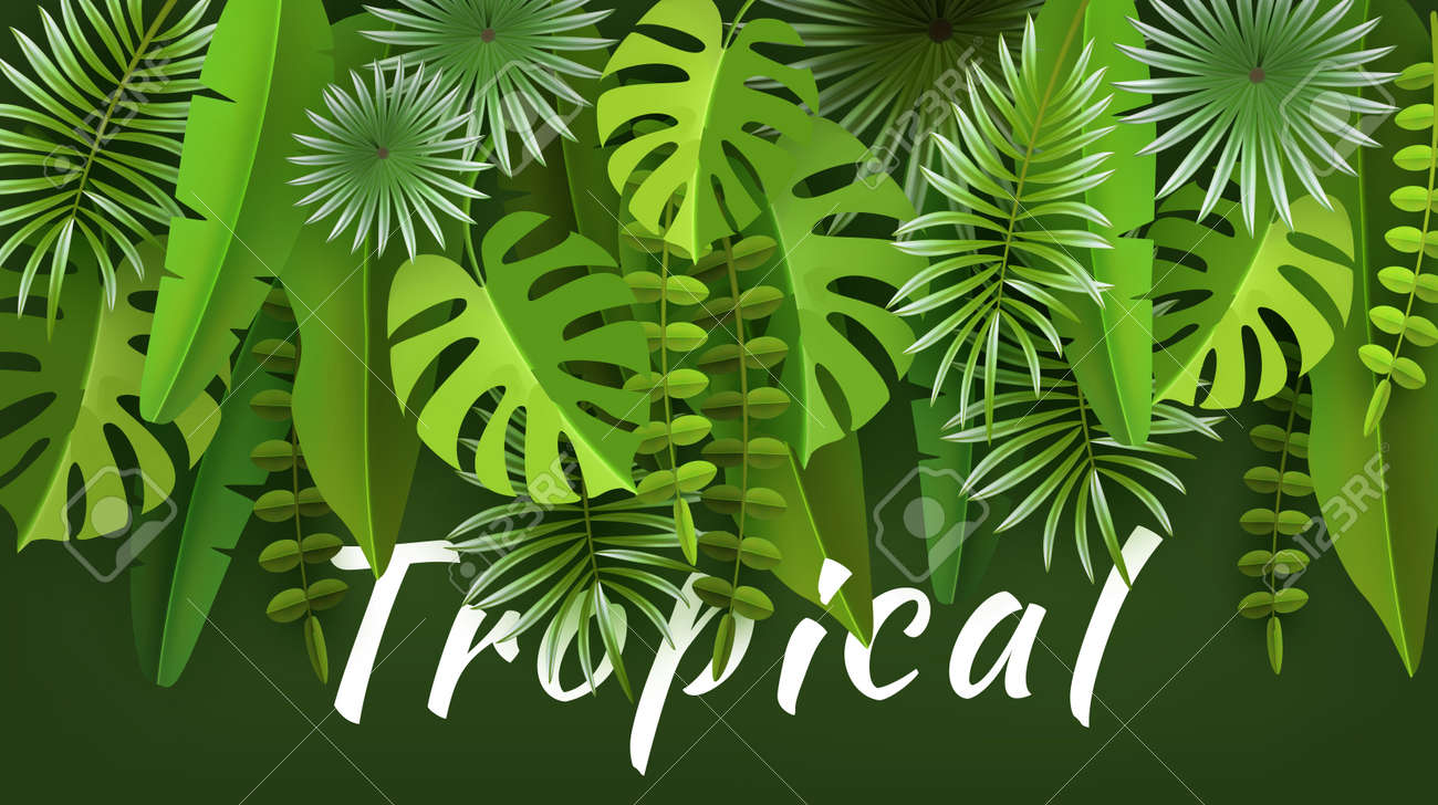Tropical leaves and plants  Green abstract background with tropical
