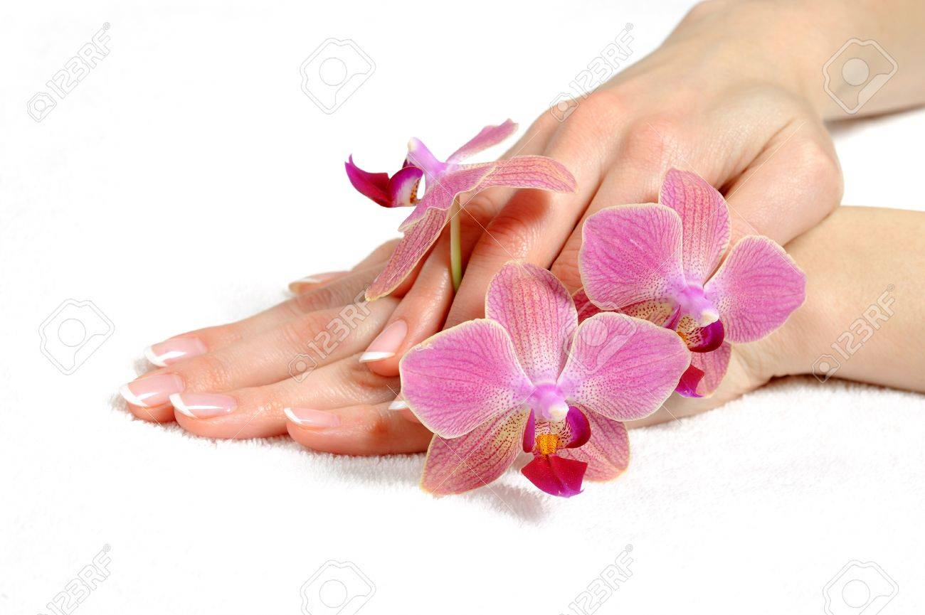 Beautiful hand with perfect nail french manicure and purple orchid flowers. isolated on white background Stock Photo - 8737743