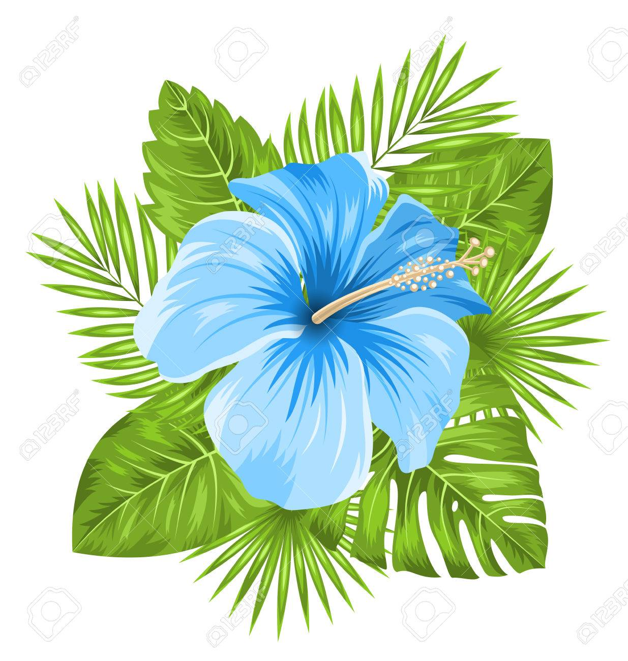 Illustration beautiful blue hibiscus flowers blossom and tropical illustration beautiful blue hibiscus flowers blossom and tropical leaves isolated on white background vector izmirmasajfo