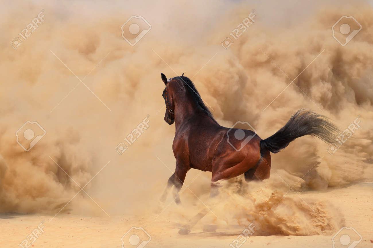 cheval arabe desert