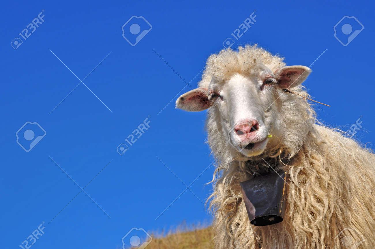 Sheep on a hillside - 8479949