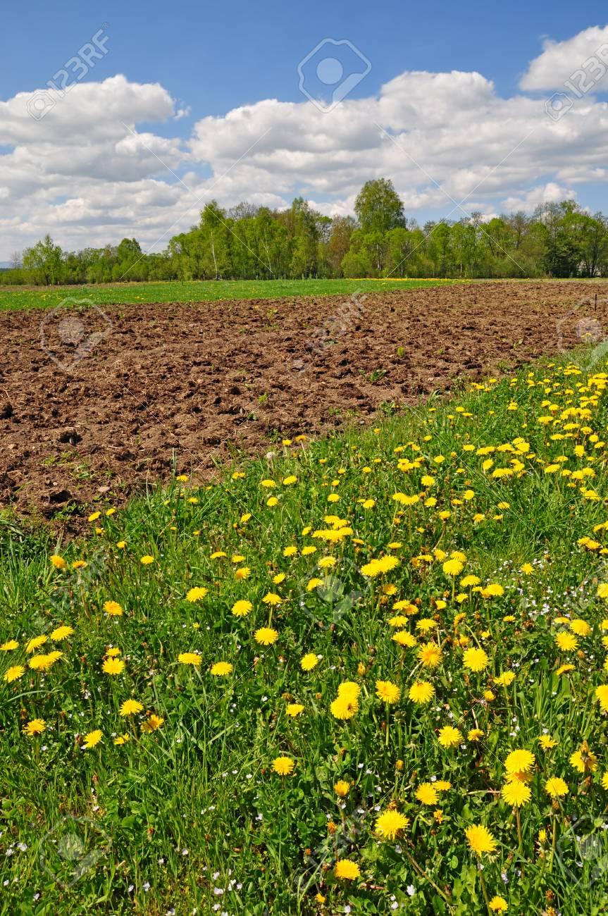 Spring field Stock Photo - 12794105
