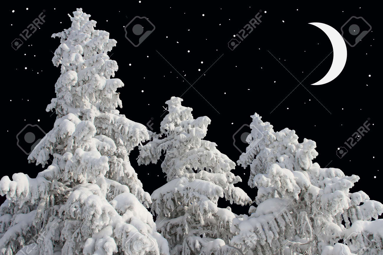 Firs under snow against the night sky with the moon Stock Photo - 17340808