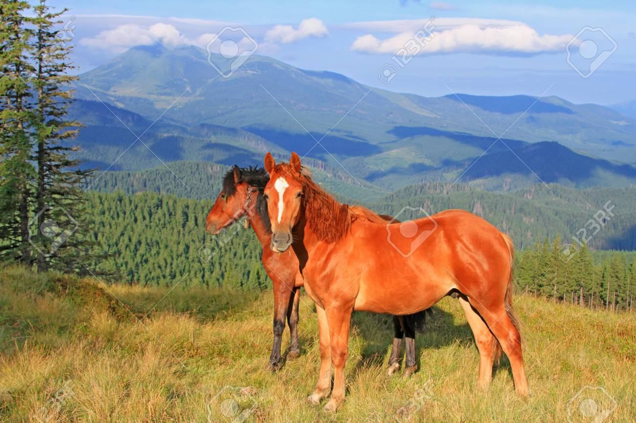 Horses on a summer mountain pasture Stock Photo - 17799231