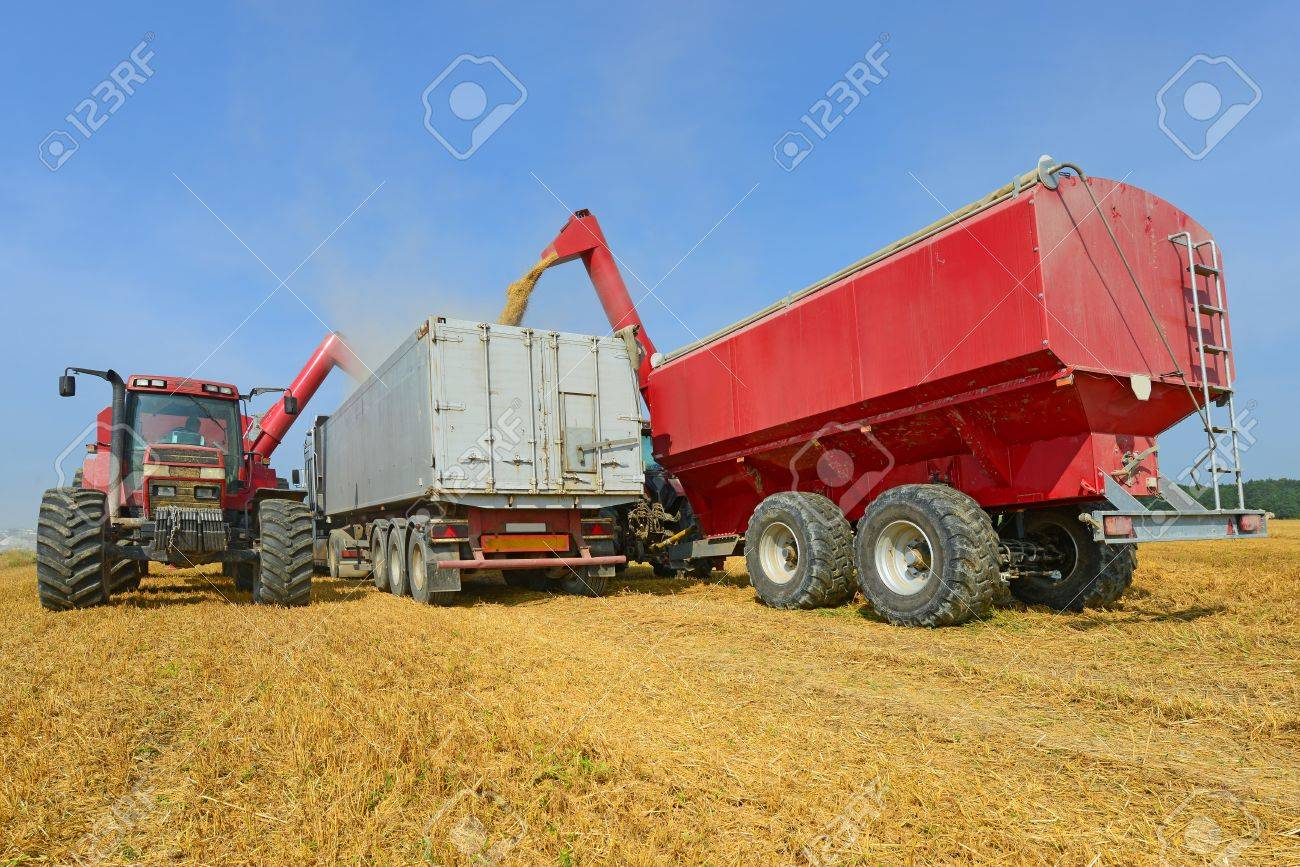 Overloading of grain bins in a car tractor Stock Photo - 20861073