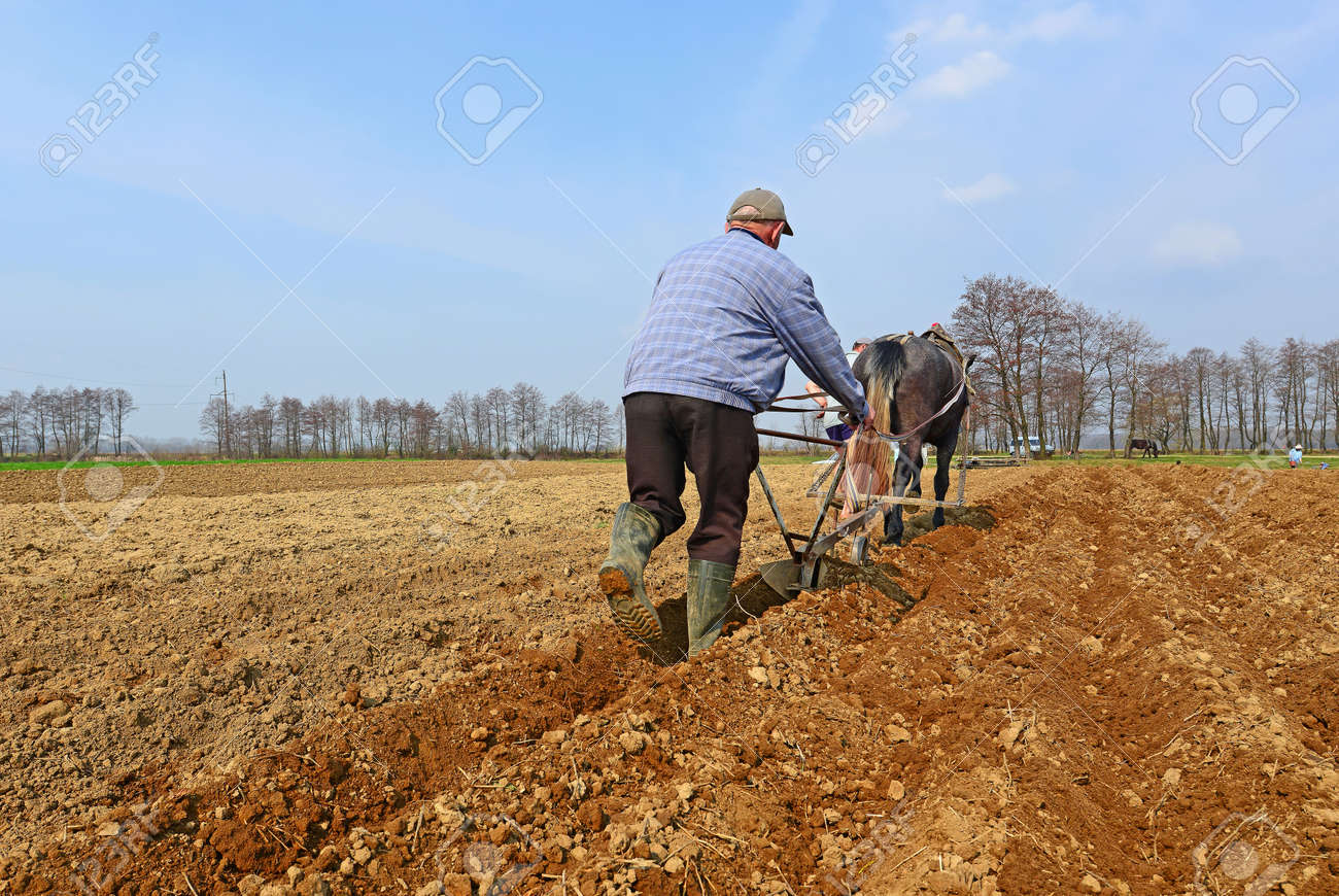 Fallowing of a spring field by a manual plow on horse-drawn Stock Photo -