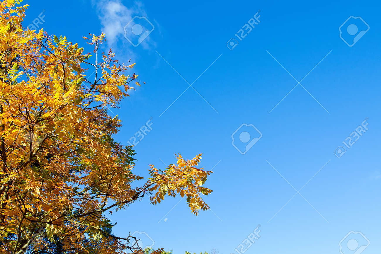 autumn tree with blue sky background Stock Photo - 15696542