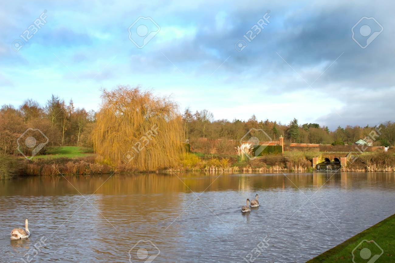 swans in an countryside scene Stock Photo - 17989772