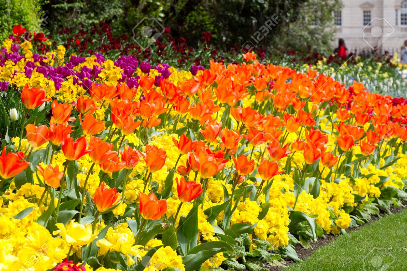 A variety of bright colourful spring flowers blooming in st james a variety of bright colourful spring flowers blooming in st james park stock photo 26451574 dhlflorist Choice Image