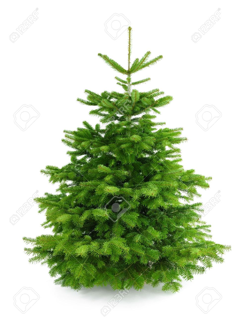 Studio shot of a fresh gorgeous Christmas tree without ornaments, isolated  on white Stock Photo