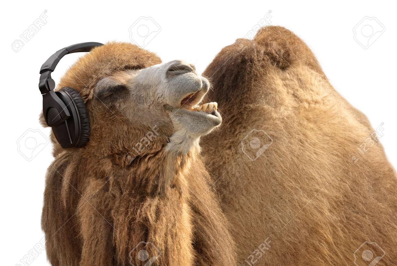 camel tunes