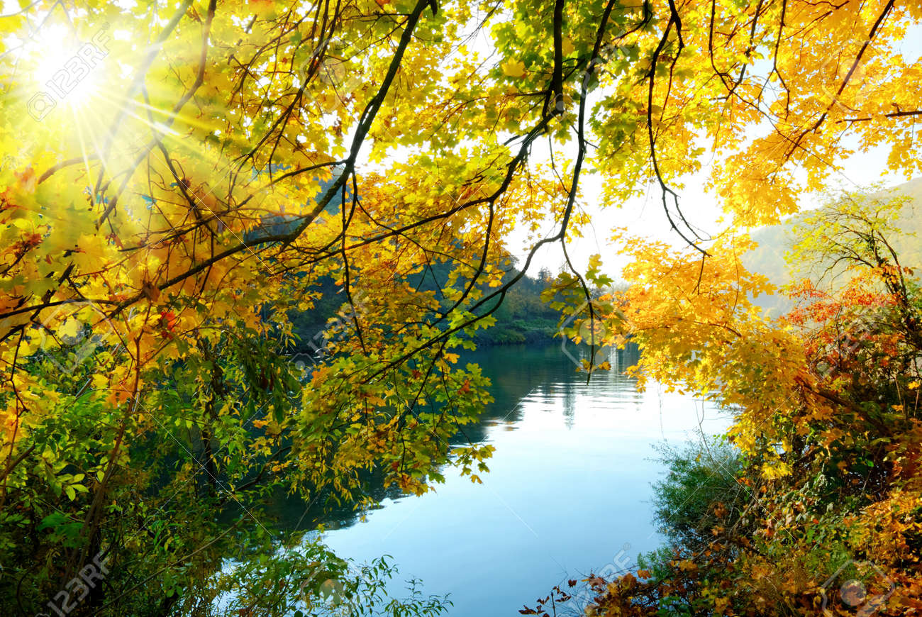 Colorful autumn scenery at a river, with the sun shining through the golden leaves - 14743575