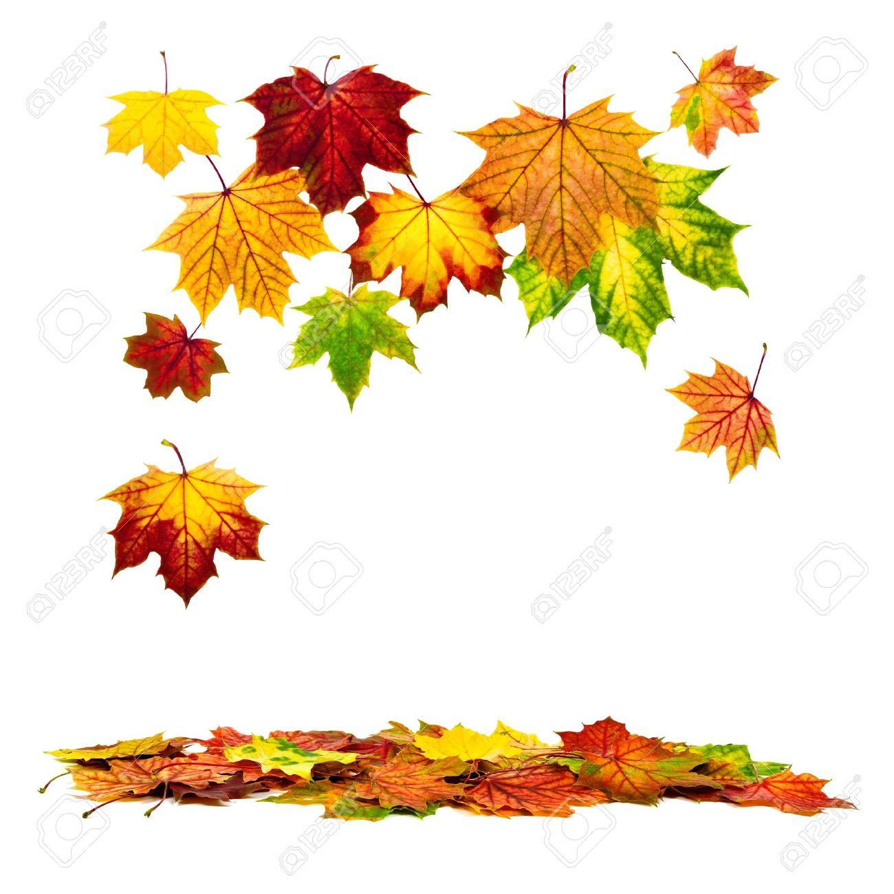 Risultati immagini per foglie autunno