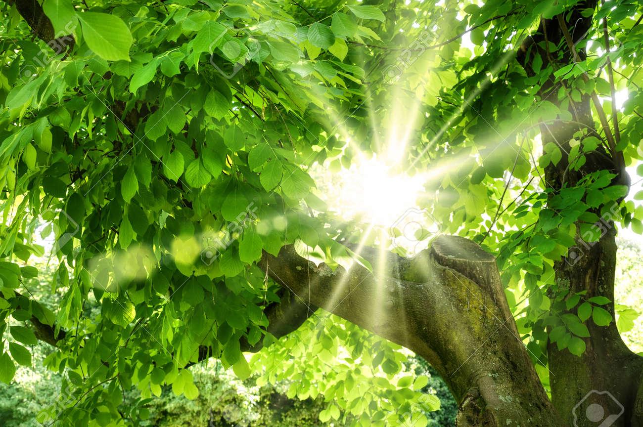 The summer sun shining beautifully through vivid green foliage Stock Photo - 18952149