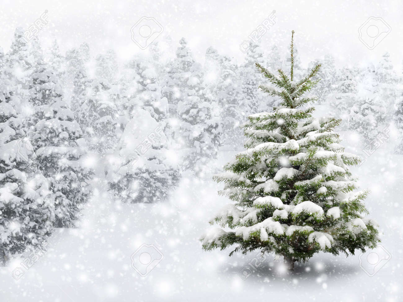 Outdoor shot of a nice little fir tree in thick snow, for the perfect Christmas mood - 23980927