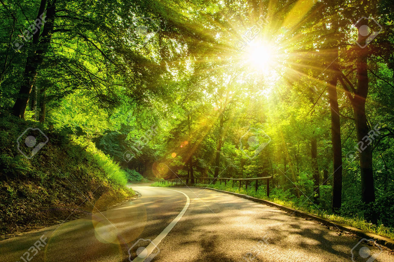 Landscape Shot With The Gold Sun Rays Illumining A Scenic Road In Beautiful Green Forest