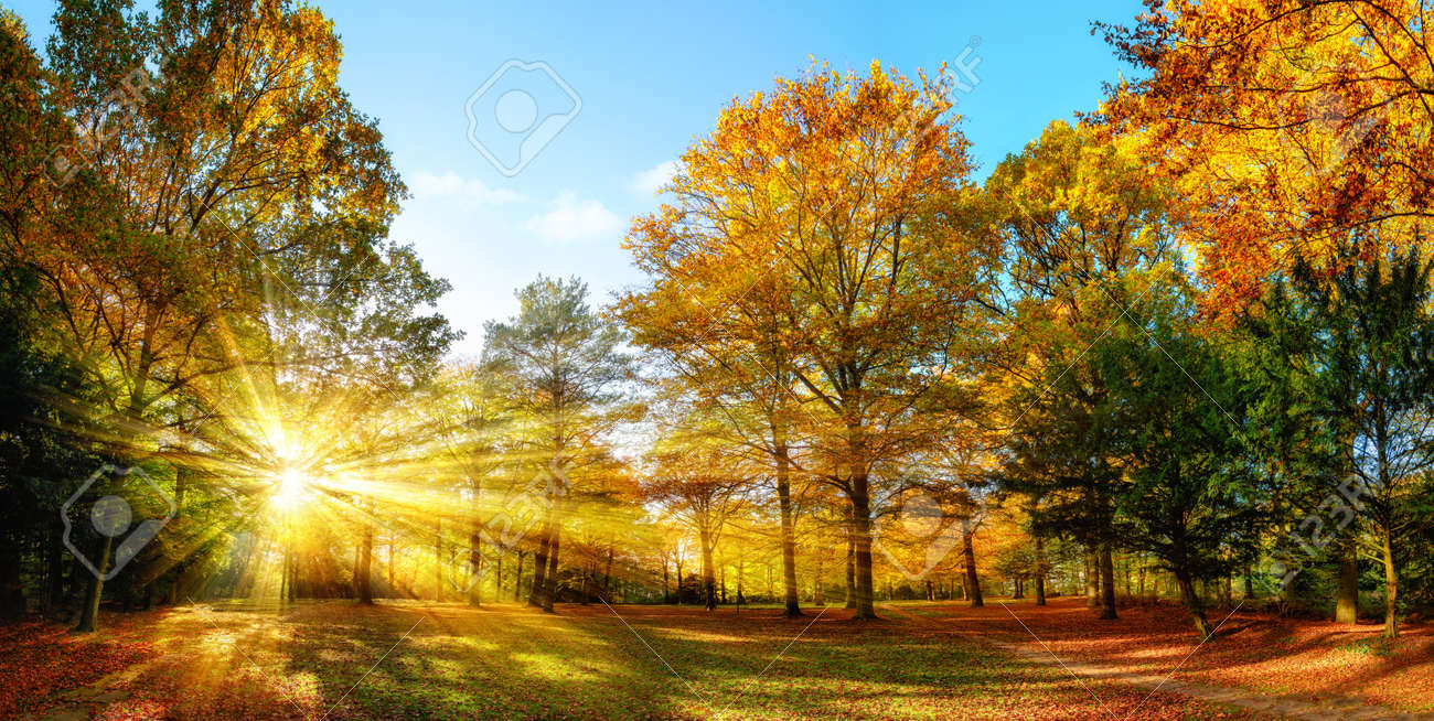 Scenic autumn panorama with the sun shining through the gold foliage and illumining the forest landscape Stock Photo - 44219555