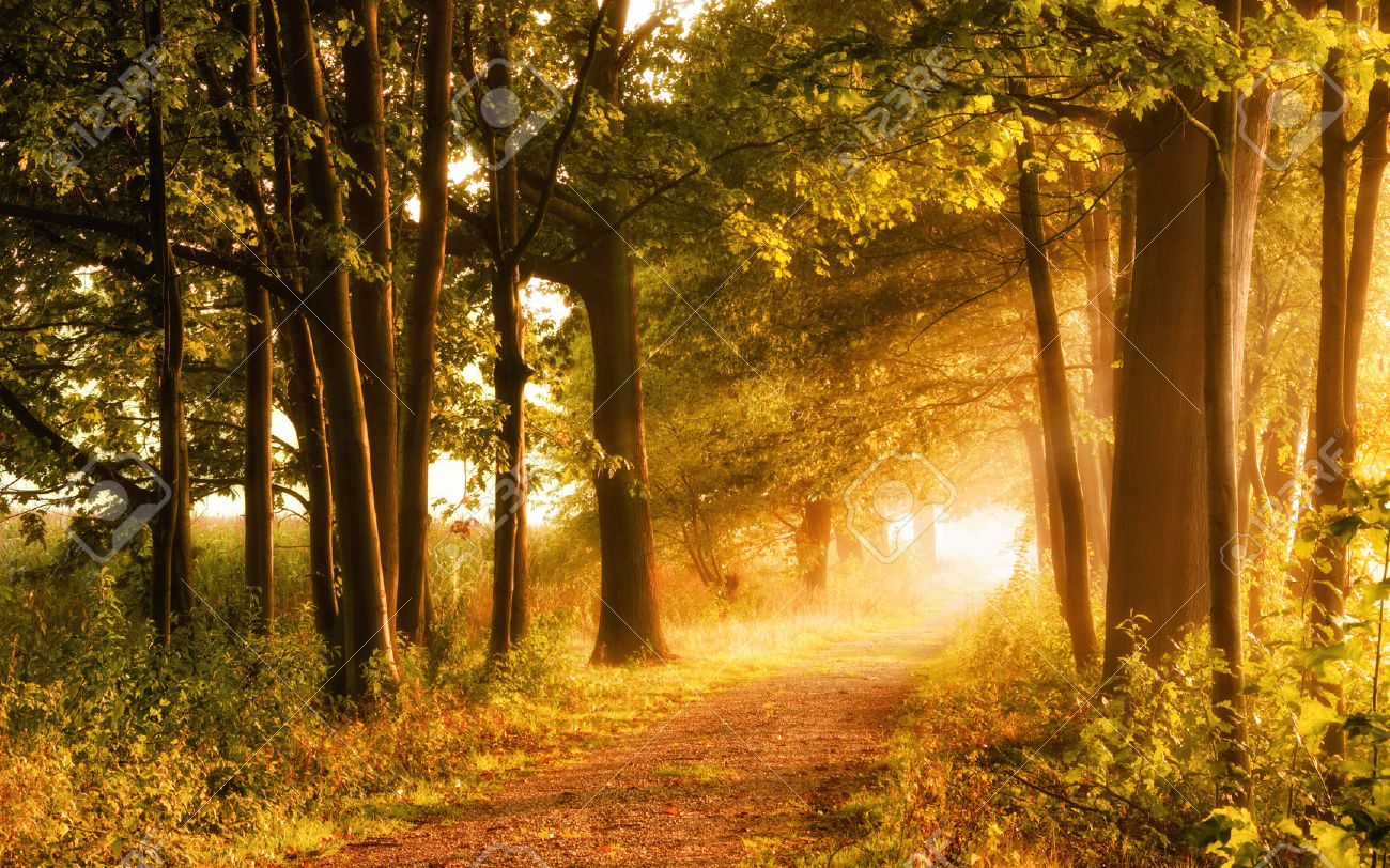 Beautiful autumn scene invites to a walk on a misty footpath in the forest with beams of sunlight Standard-Bild - 44196657