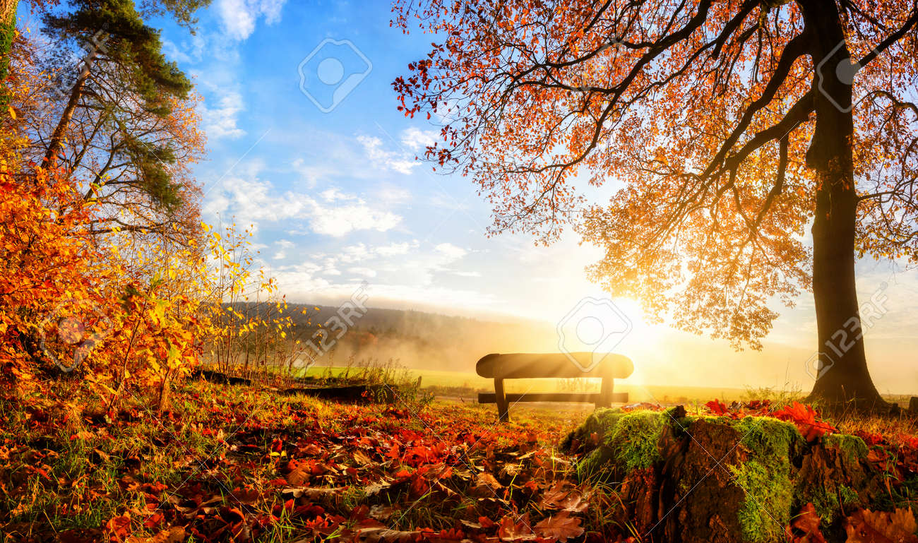 Autumn landscape with the sun warmly illumining a bench under a tree, lots of gold leaves and blue sky - 44379859