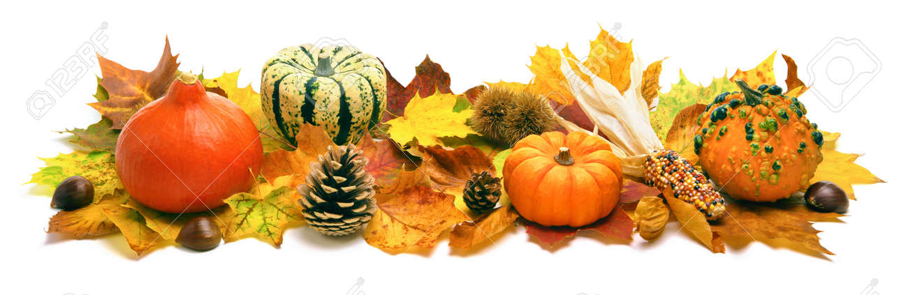 Natural autumn decoration arranged with dry leaves, ornamental pumpkins, cones and more, studio isolated on white, wide format - 44380202