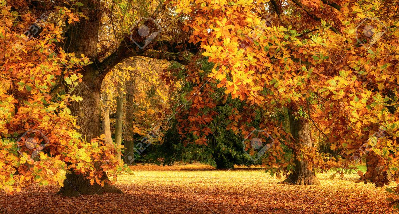 foto de Tranquille Paysages D'automne Montrant Un Magnifique Chêne Avec ...