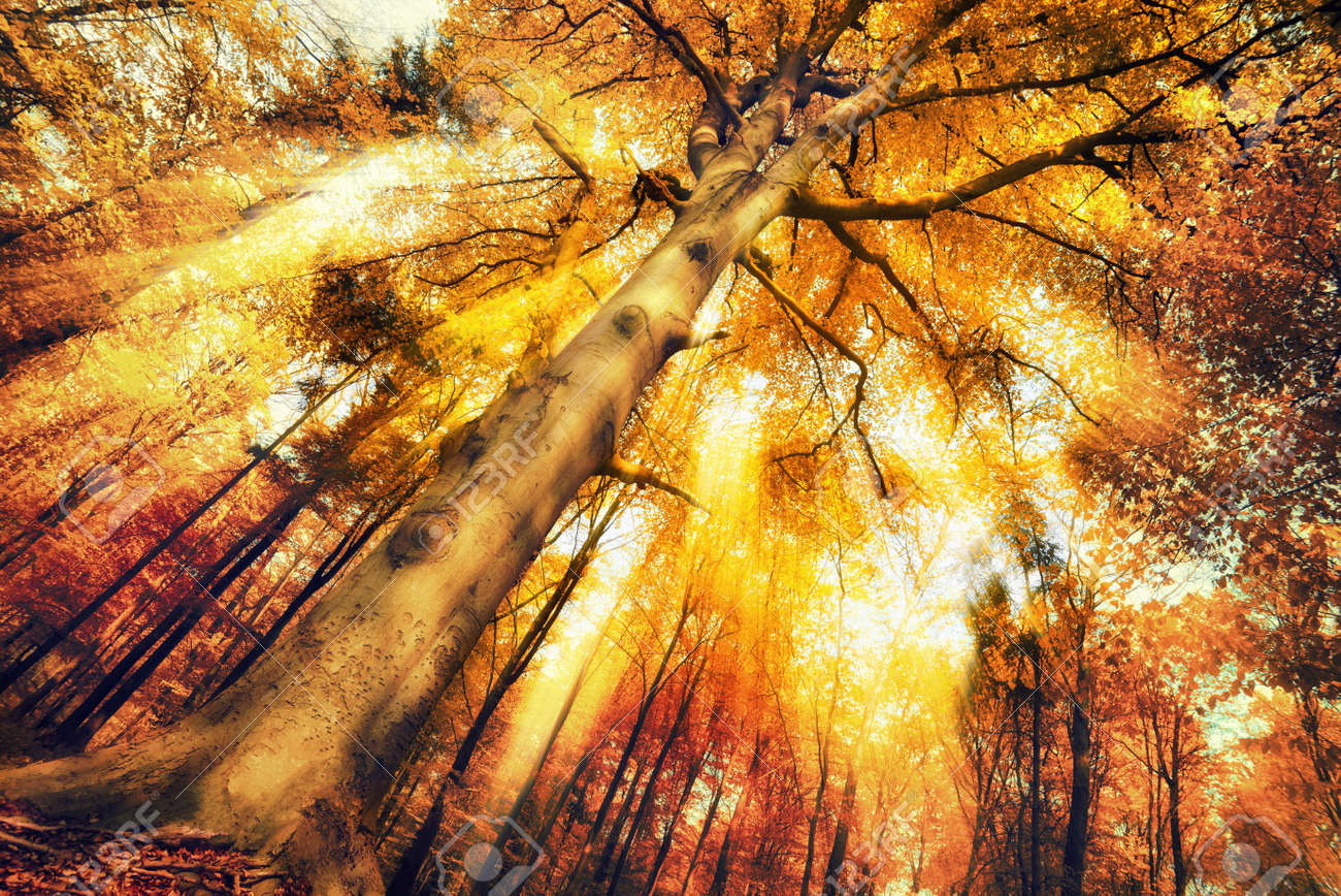 Enchanting forest scenery in autumn, with intense moody light falling through the foliage - 45080530