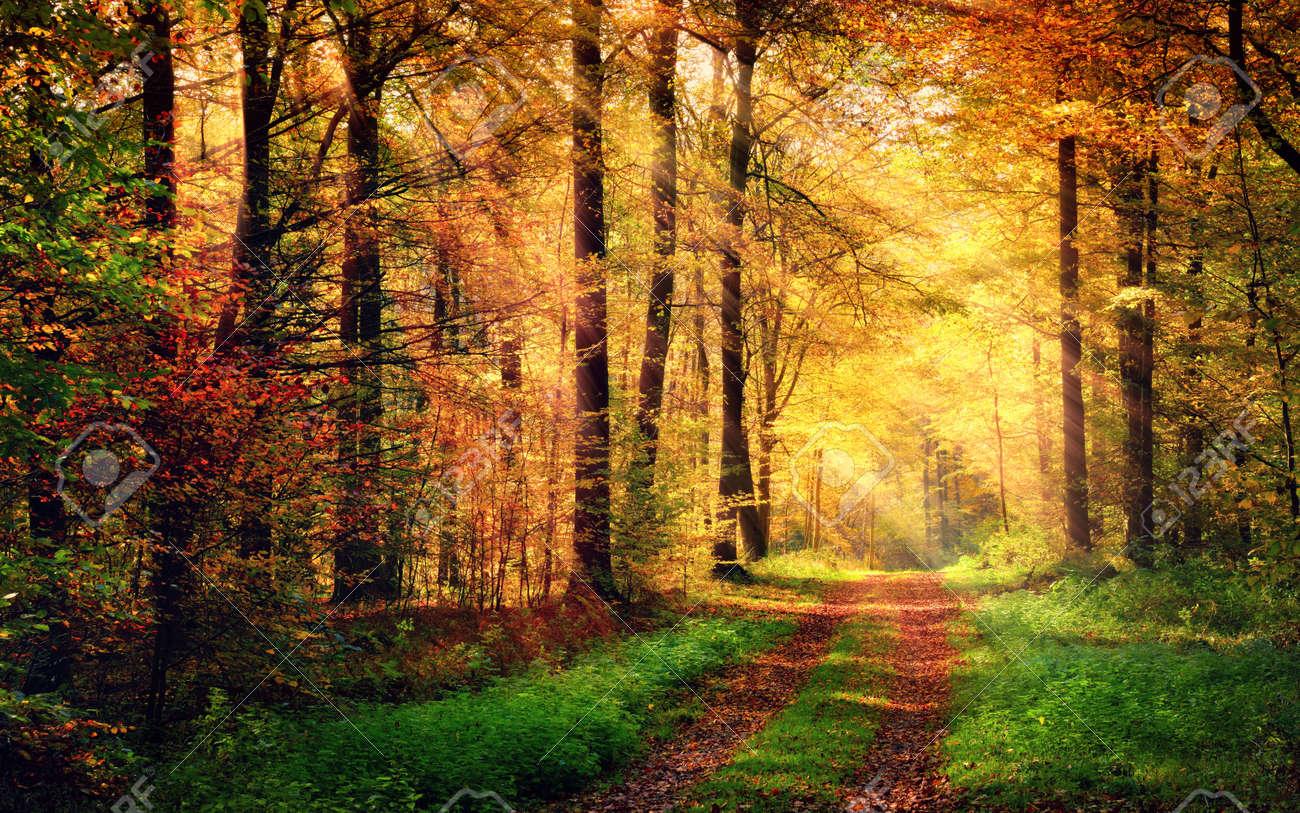 ⭐️ Cảnh Đẹp Mùa Xuân Trên Thế Giới ⭐️ 45080994-autumn-forest-scenery-with-rays-of-warm-light-illumining-the-gold-foliage-and-a-footpath-leading-int