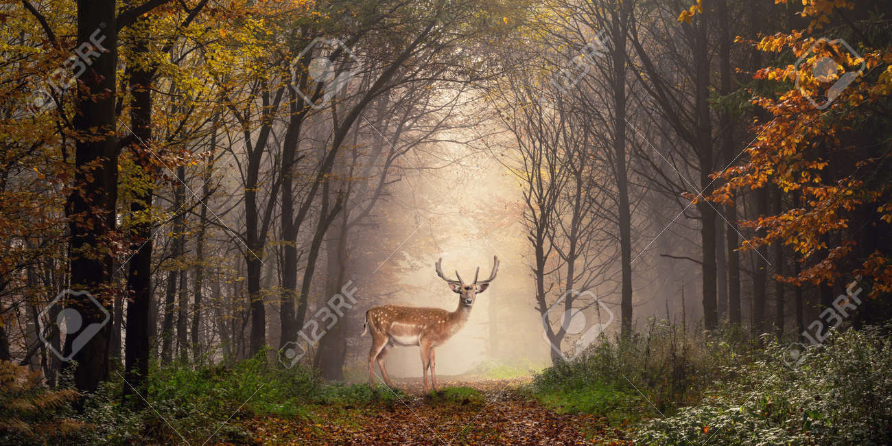 Fallow deer standing in a dreamy misty forest, with beautiful moody light in the middle and framed by darker trees - 64461082