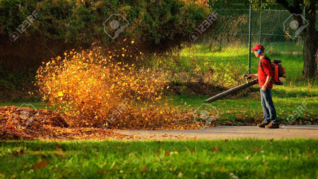 Man operating a heavy duty leaf blower: the leaves are being swirled up and glow in the pleasant sunlight - 65438191