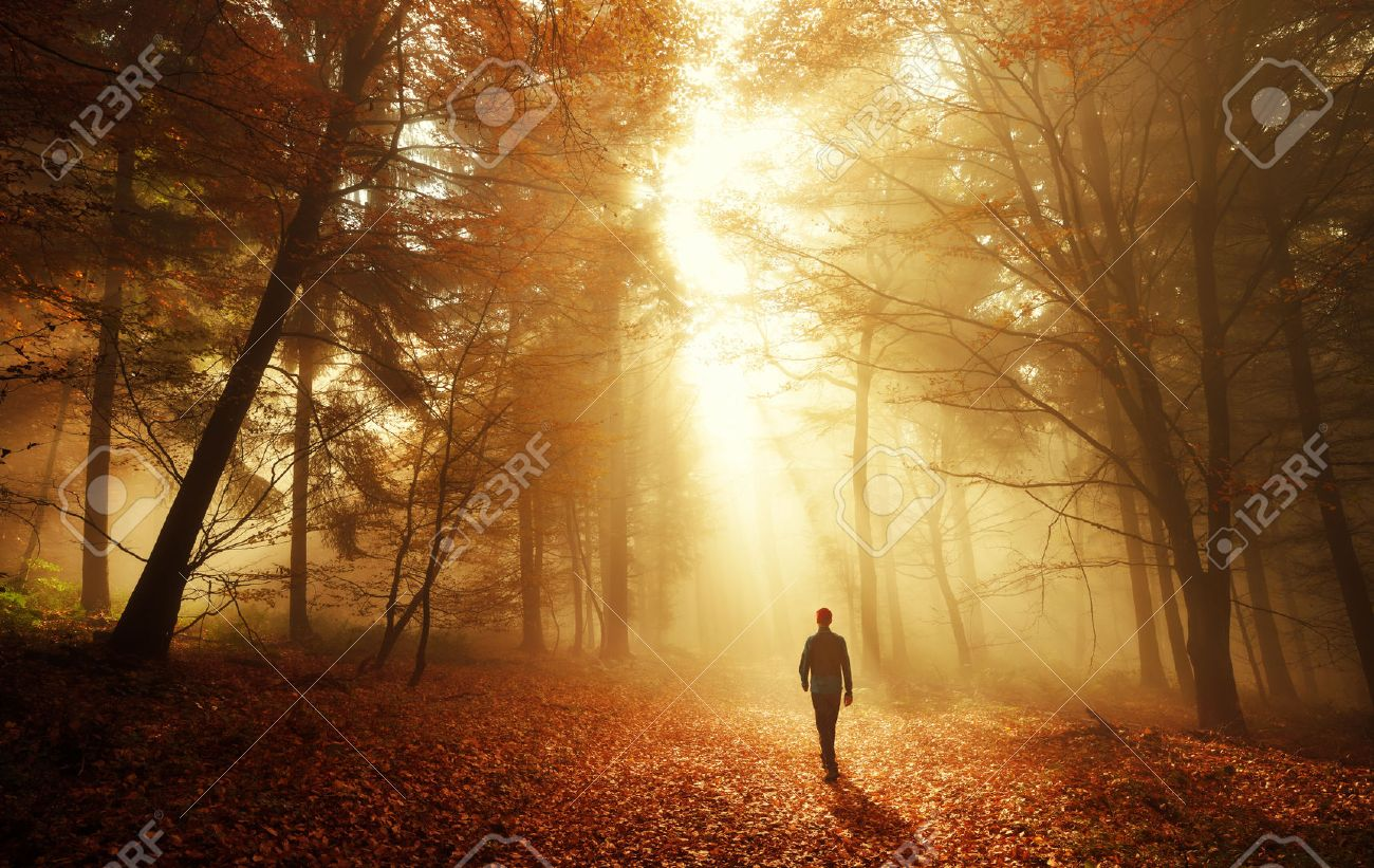 Male hiker walking into the bright gold rays of light in the autumn forest, landscape shot with amazing dramatic lighting mood - 65438195