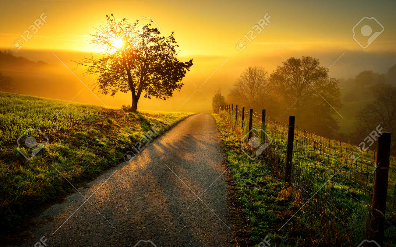 Idyllic rural landscape on a hill with a tree on a meadow at sunrise, a path leads into the warm gold light - 64461478