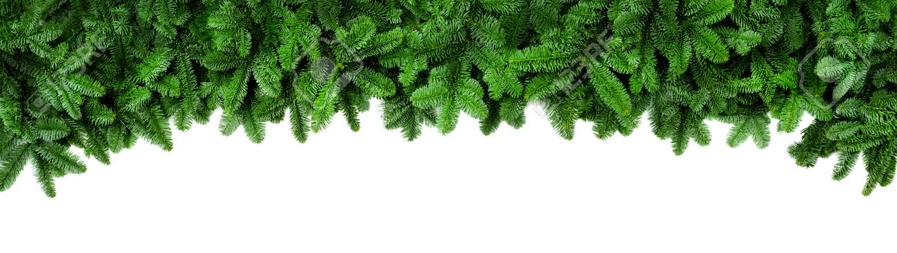 Wide Christmas border arranged with fresh fir branches isolated on white shaped as an arch, banner format - 88412759