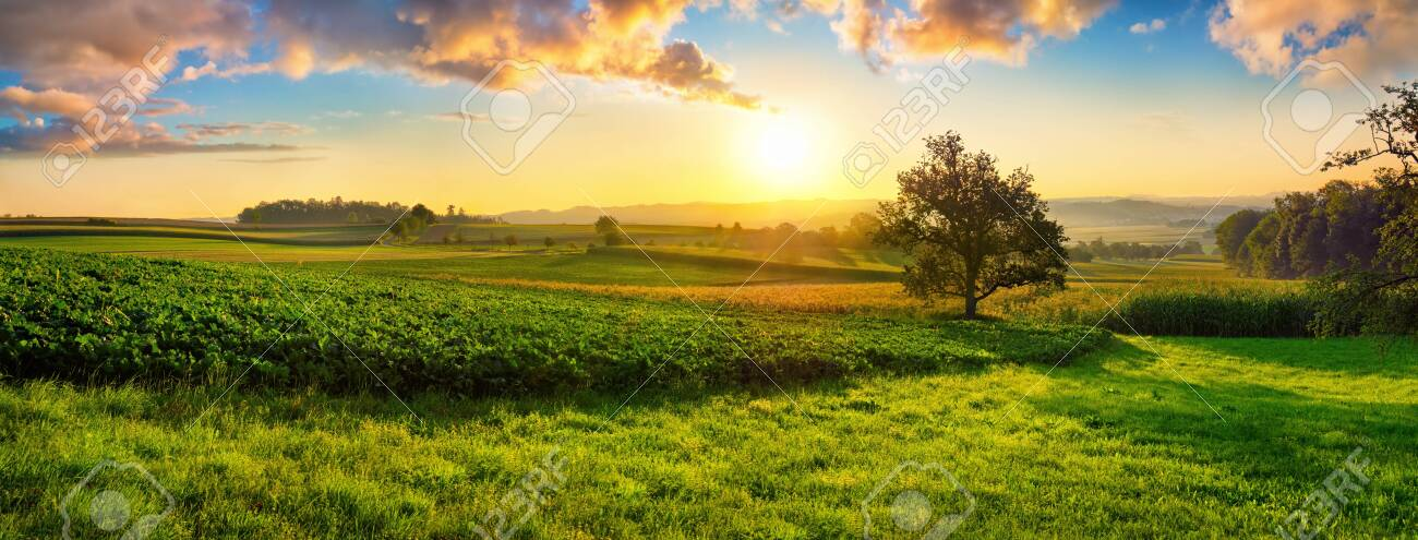 Tranquil panoramic rural landscape scenery in an early summer morning after sunrise, with a tree on green meadows and colorful clouds in the gold and blue sky - 148964165