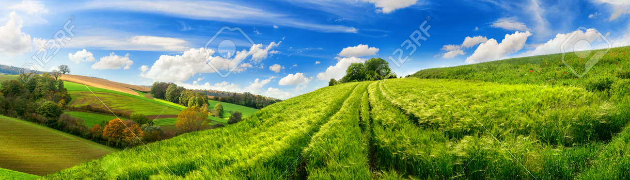 Panoramic rural landscape with idyllic vast green barley fields on hills and trails as lines leading to trees on the horizon, with deep blue sky and fluffy white clouds - 148829718