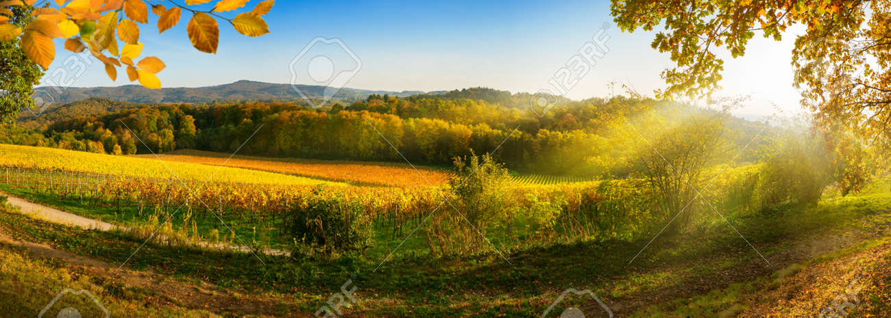 Panoramic rural landscape in autumn with vineyards, hills, vibrant blue sky and rays of sunlight, framed by gold foliage - 151163429