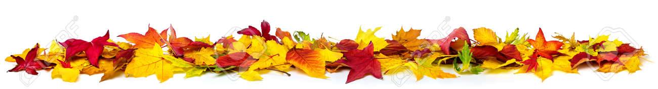 Colorful autumn leaves on the ground as a border, extra wide panorama format with vibrant colors, isolated on white - 155771376