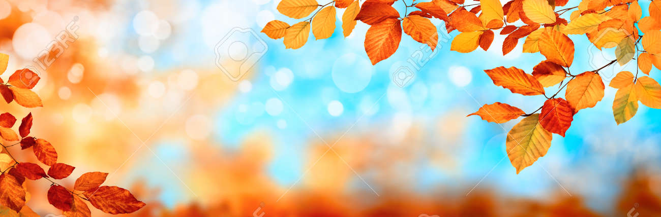 Colorful autumn background in panoramic format, with red and gold leaves framing the blue bokeh highlights - 154893780