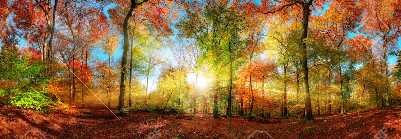 Colorful forest panorama in autumn, with the bright sun centered and casting beautiful rays through the branches - 154890048