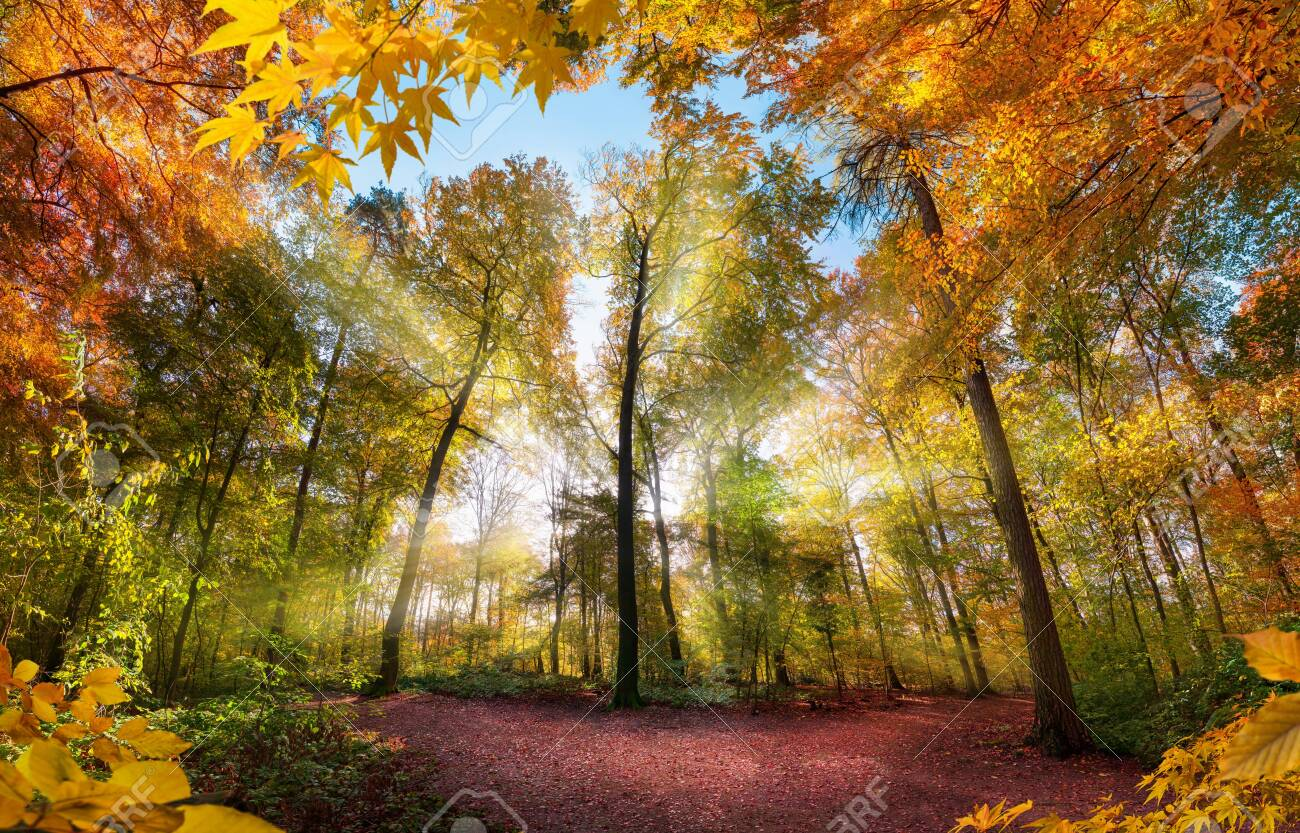 Fabulous forest scenery in autumn with sun rays illuminating the colorful foliage, with branches framing the landscape - 154888804